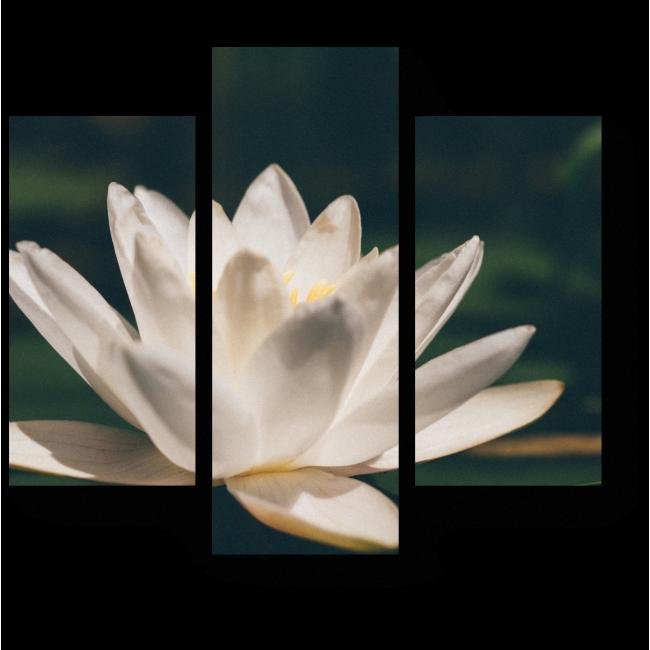 Модульная картина Белый лотос