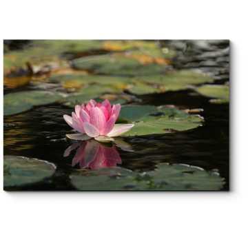 Розовый лотос