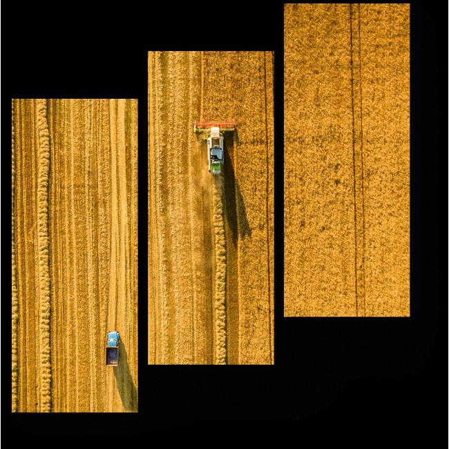 Модульная картина Сбор урожая