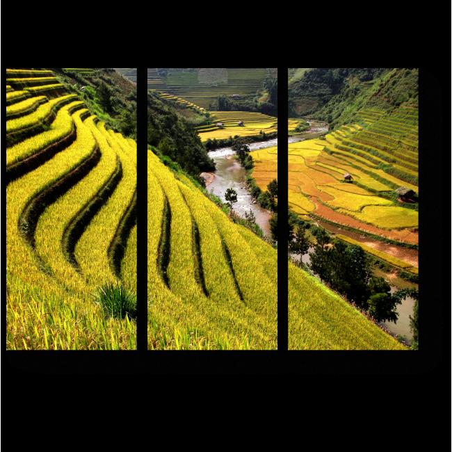 Модульная картина Рисовое поле