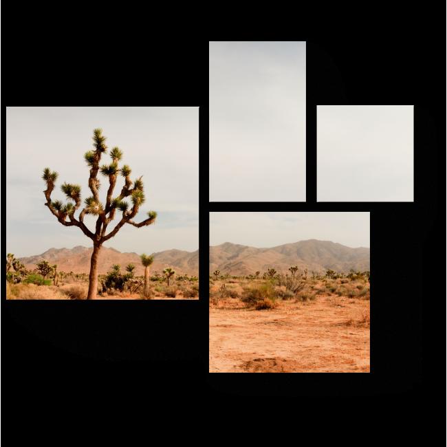 Модульная картина Вид из национального парка Джошуа