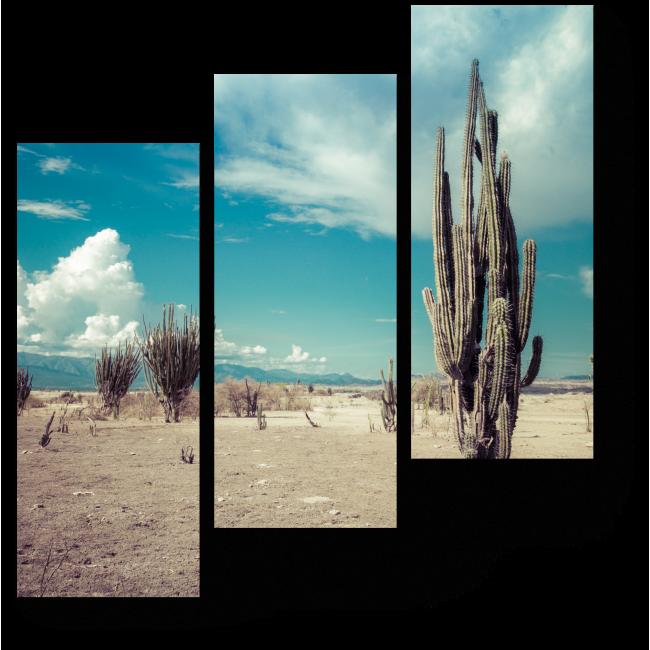 Модульная картина Кактус в пустыне