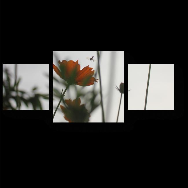 Модульная картина Цветы космеи в вечернем свете