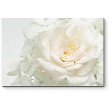 Модульная картина Белоснежная роза