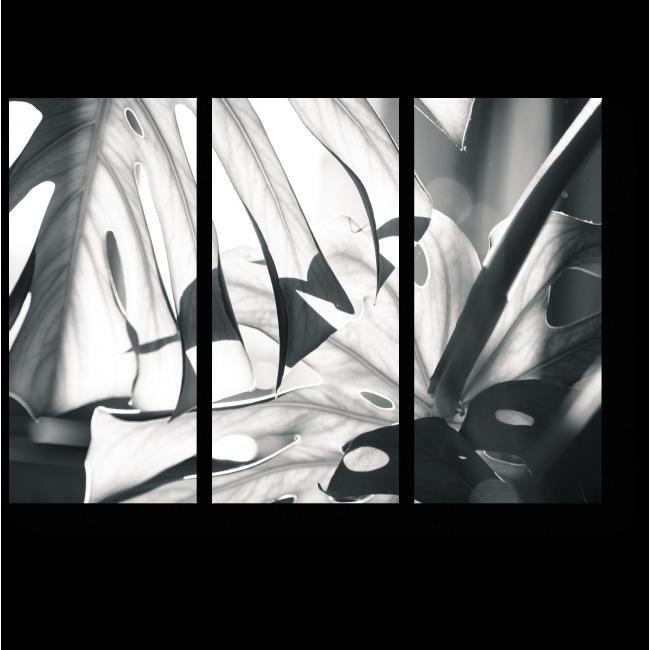 Модульная картина Сквозь джунгли