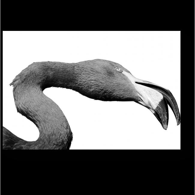 Модульная картина Задумчивый фламинго