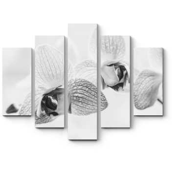 Черно-белые орхидеи