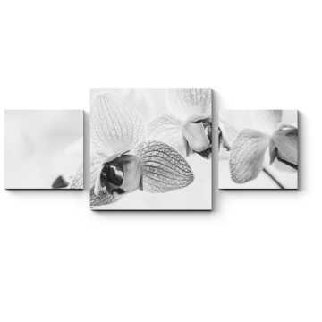 Модульная картина Черно-белые орхидеи