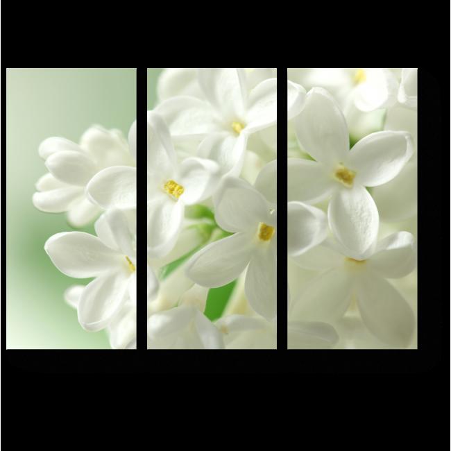 Модульная картина Цветущий гиацинт