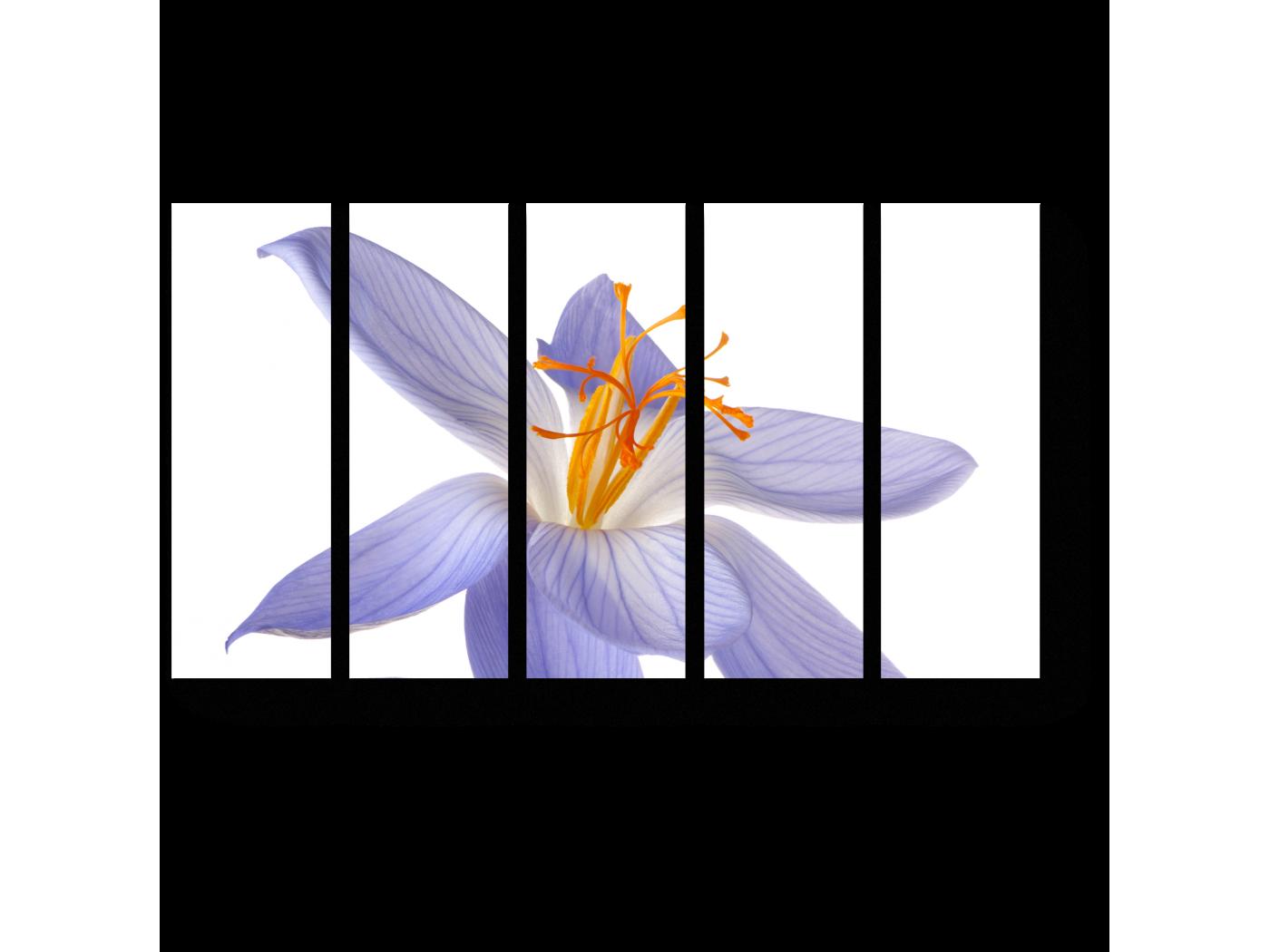 Модульная картина Нежно-фиолетовый крокус (90x54) фото