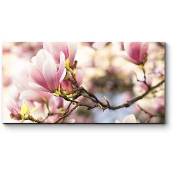 Весны прекрасное цветение