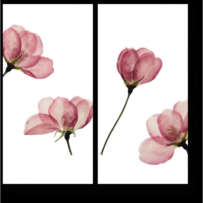 Модульная картина Сухие цветы
