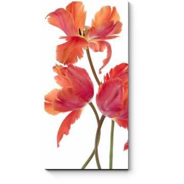 Распустившиеся тюльпаны