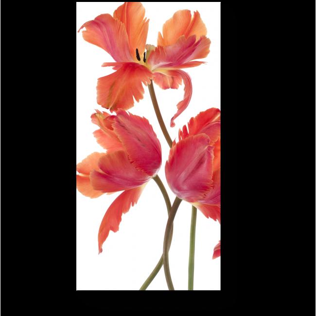 Модульная картина Распустившиеся тюльпаны