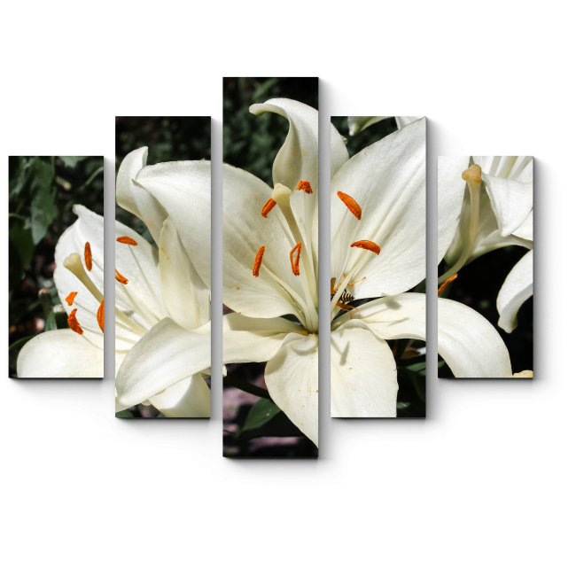 Модульная картина Чистые лилии