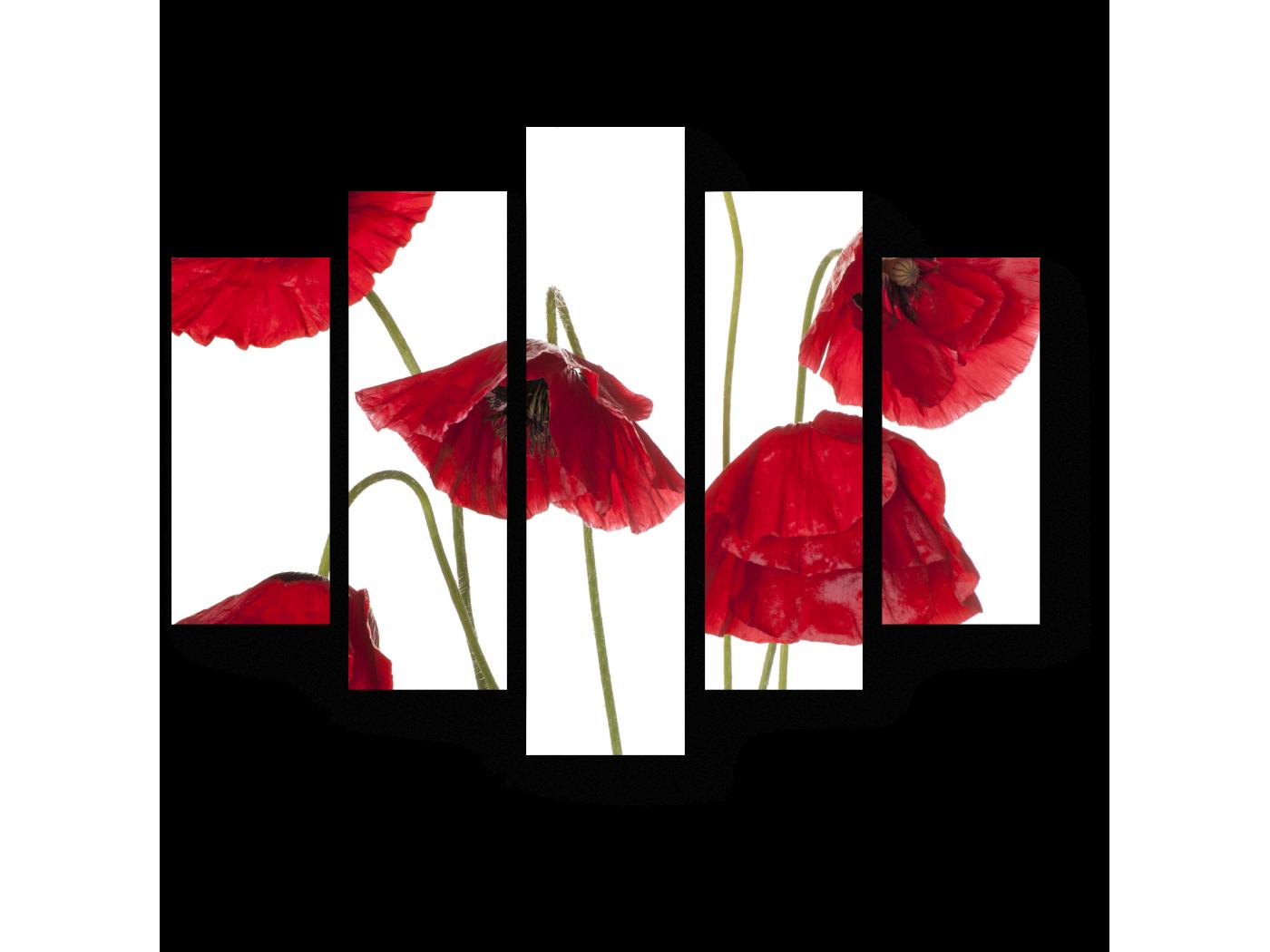 Модульная картина Маки во всей красоте (75x60) фото