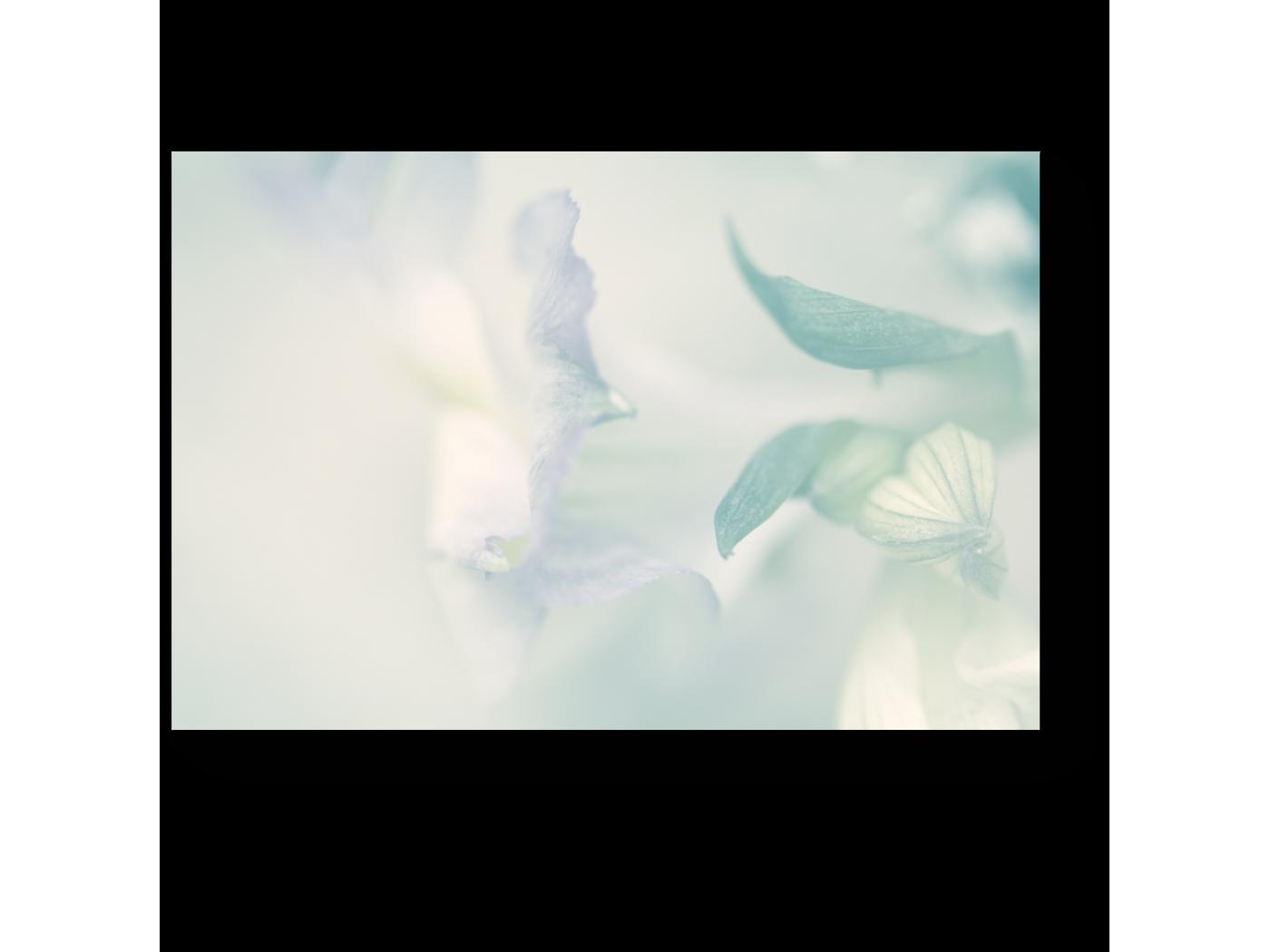 Модульная картина Воздушное цветение (30x20) фото