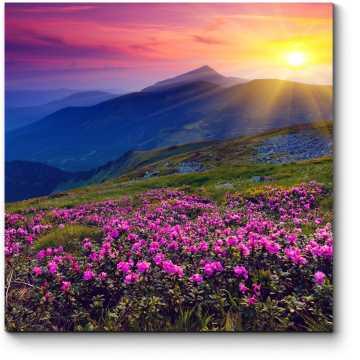 Розовые рододендроны в горах
