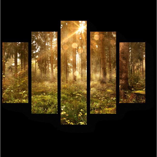 Модульная картина Лучи солнца, пронизывающие лес