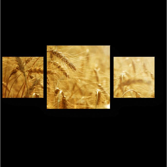 Модульная картина Золотая рожь