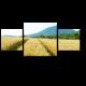 Пшеничное поле в лучах солнца