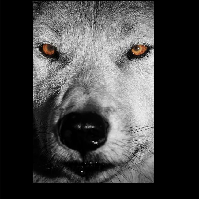 Модульная картина Взгляд хищника