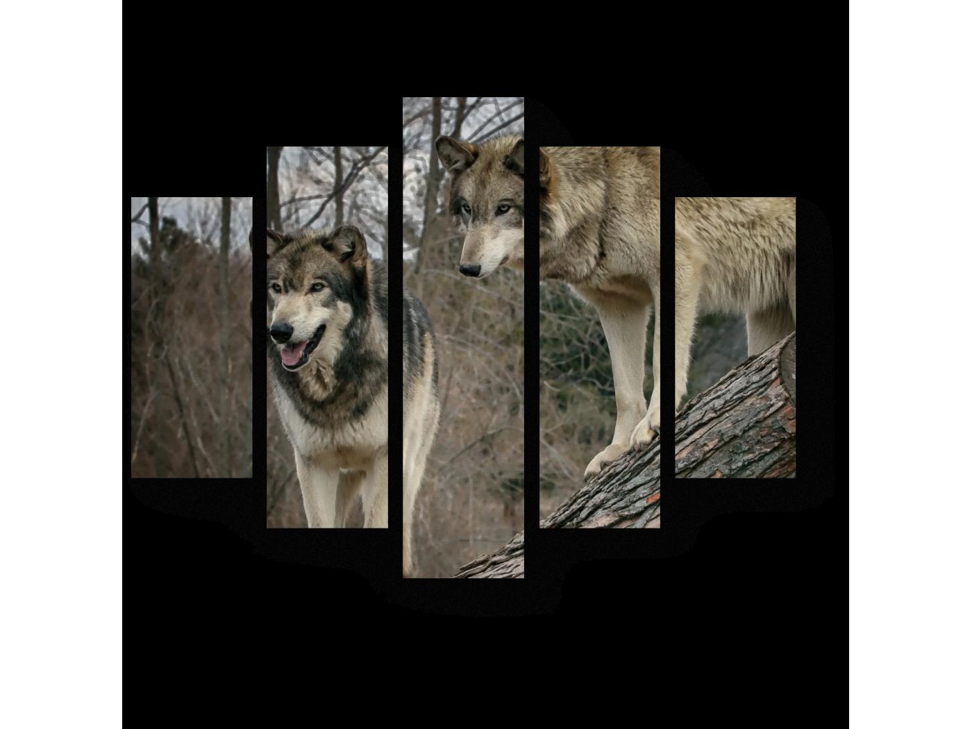 Модульная картина Волки в осеннем лесу (75x60) фото