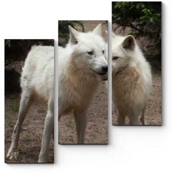 Модульная картина Величественные волки