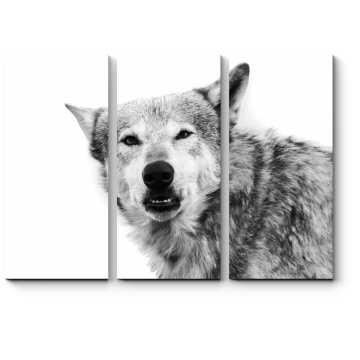Модульная картина Монохромный волк