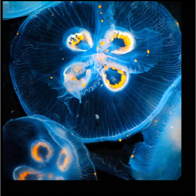 Модульная картина Морские красавицы