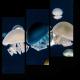 Красивые медузы