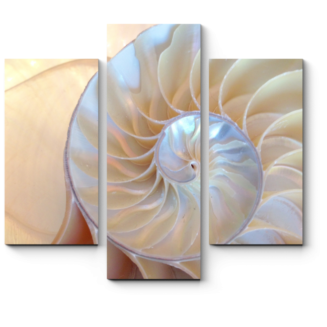 Модульная картина Перламутровая раковина