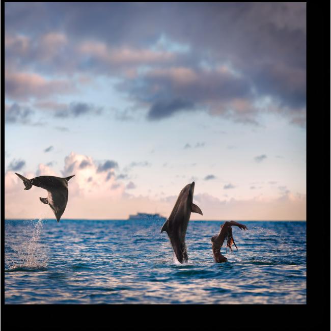 Модульная картина  Купание с дельфинами