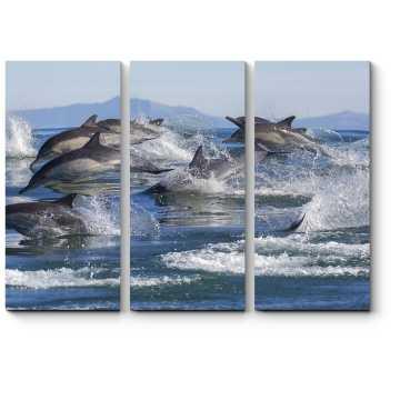Семья дельфинов