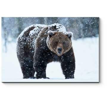 Модульная картина Бурый медведь