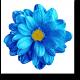 Небесной красоты цветок