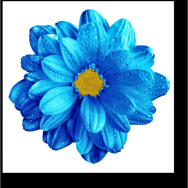 Модульная картина Небесной красоты цветок