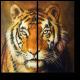Тигриный настрой