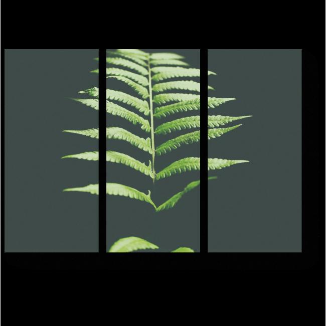 Модульная картина Лист папоротника