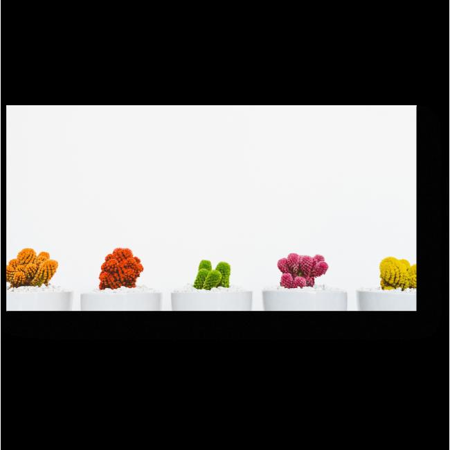 Модульная картина Разноцветные кактусы