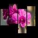 Королева цветов - прекрасная орхидея