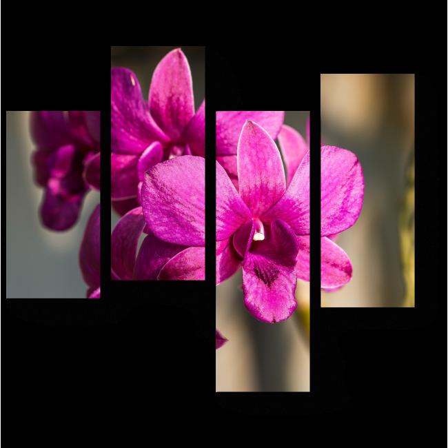 Модульная картина Королева цветов - прекрасная орхидея