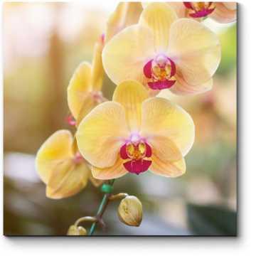Чарующая орхидея