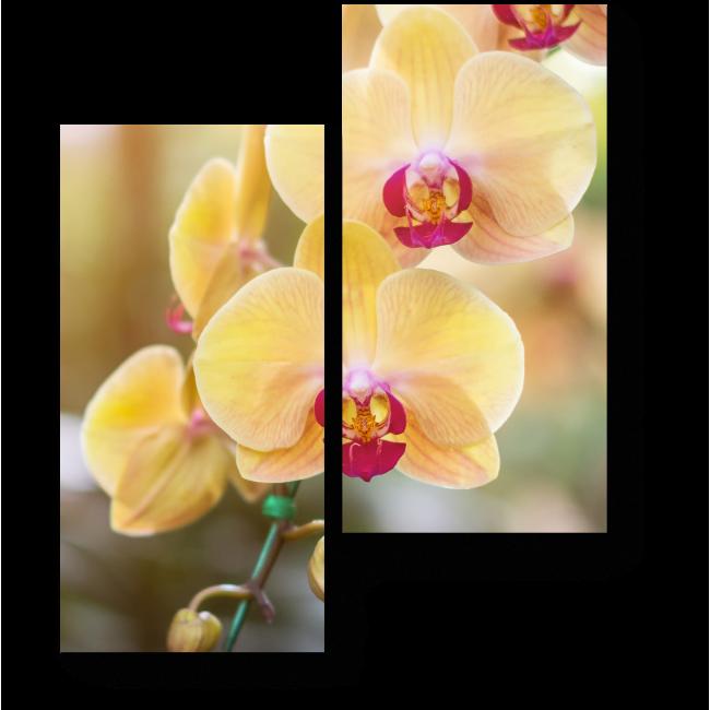 Модульная картина Чарующая орхидея