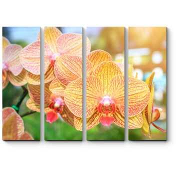 Тайская орхидея