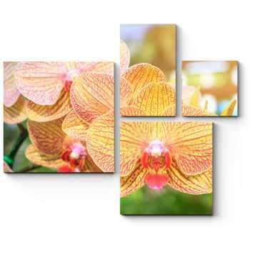 Модульная картина Тайская орхидея