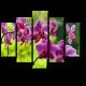 Неподражаемые орхидеи
