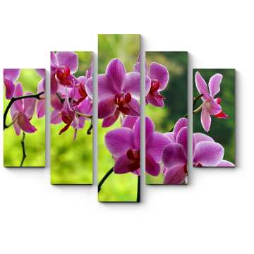 Модульная картина Неподражаемые орхидеи