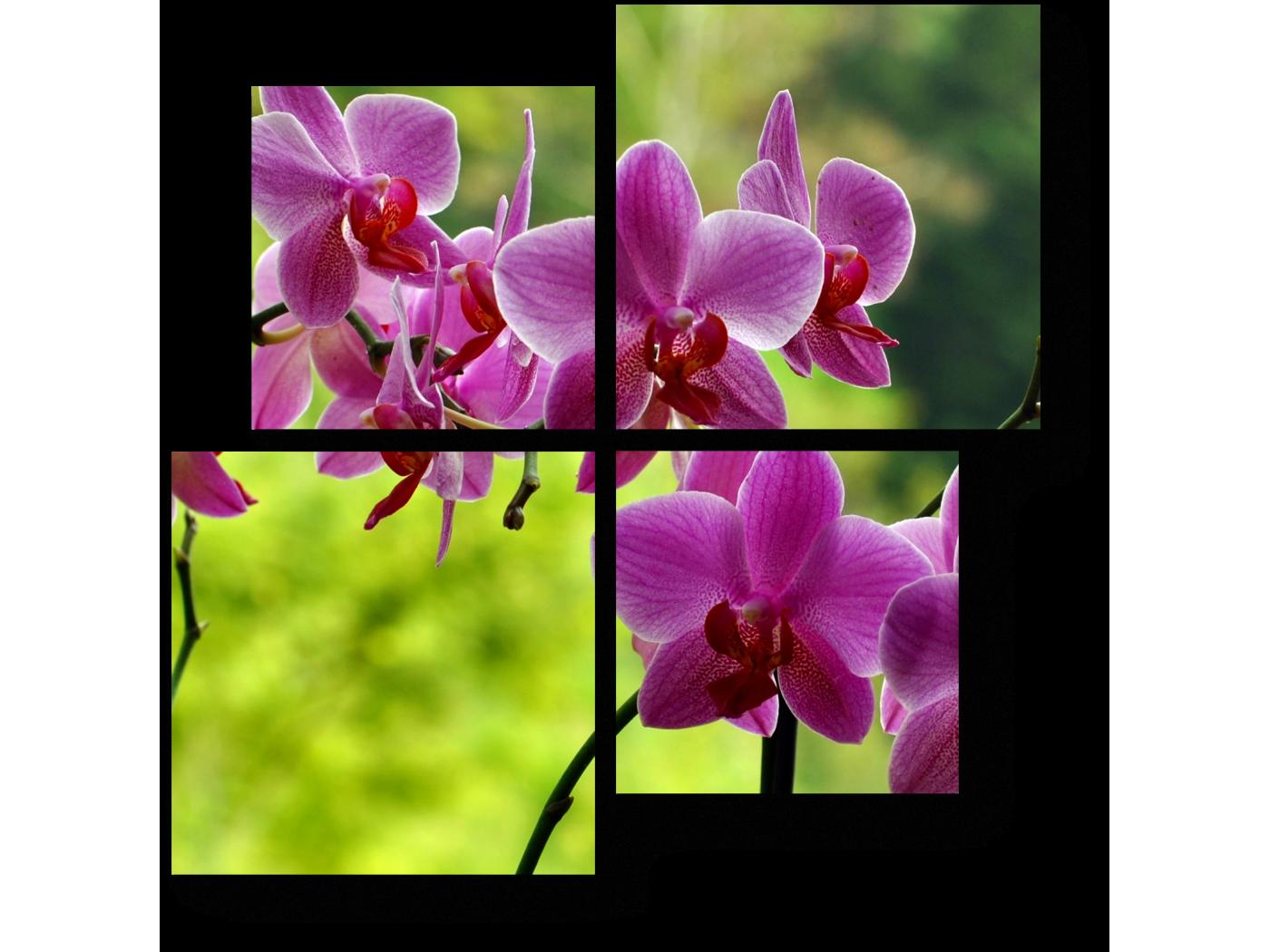 Модульная картина Неподражаемые орхидеи (50x50) фото