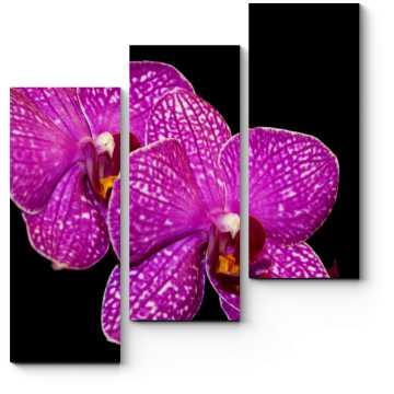 Тропическая орхидея